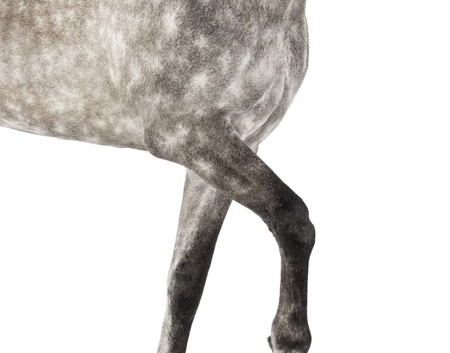 Horse with raised front let.
