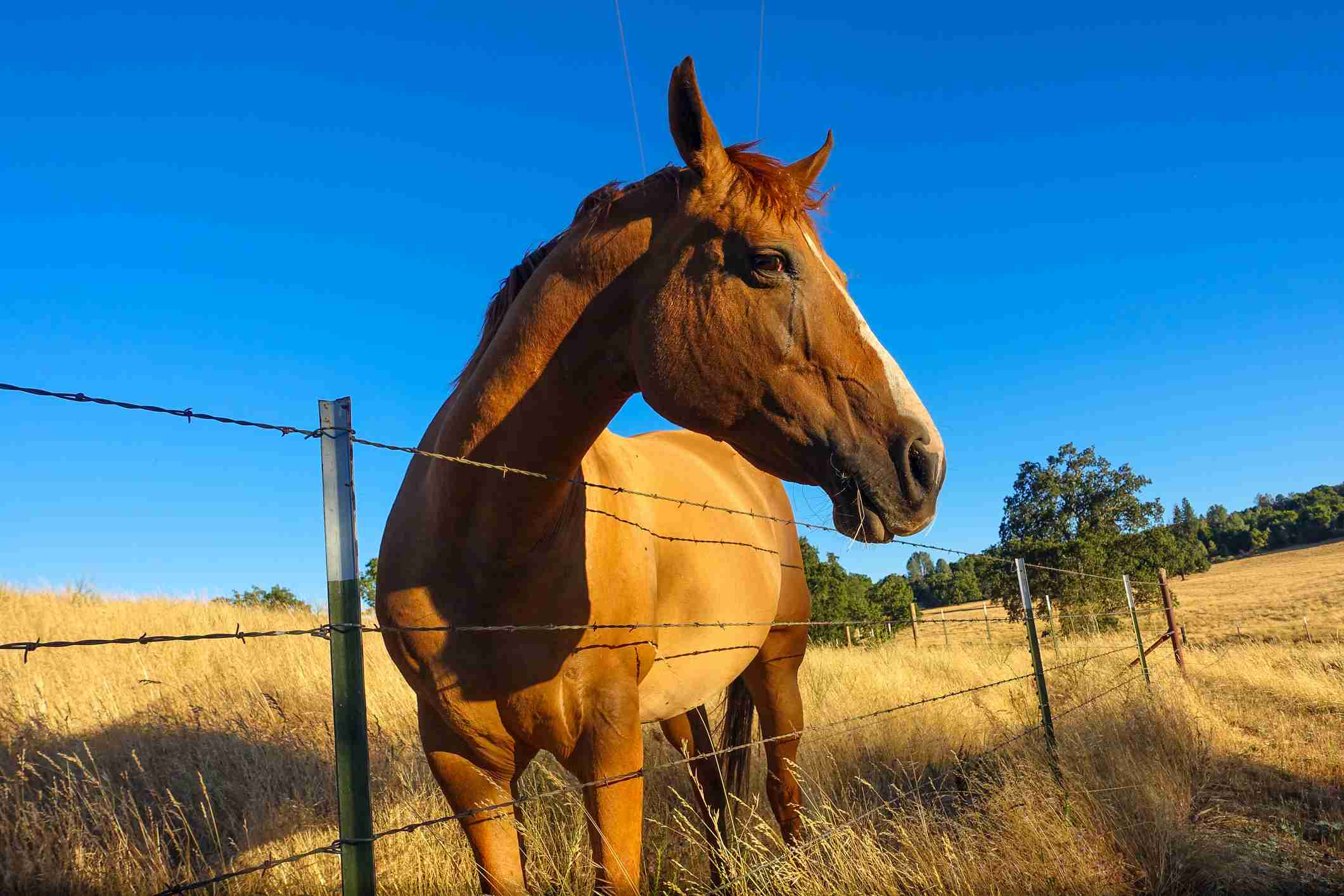 Wire fencing for a horse