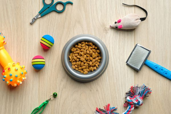Bowl with dry kibble food and cat accessories