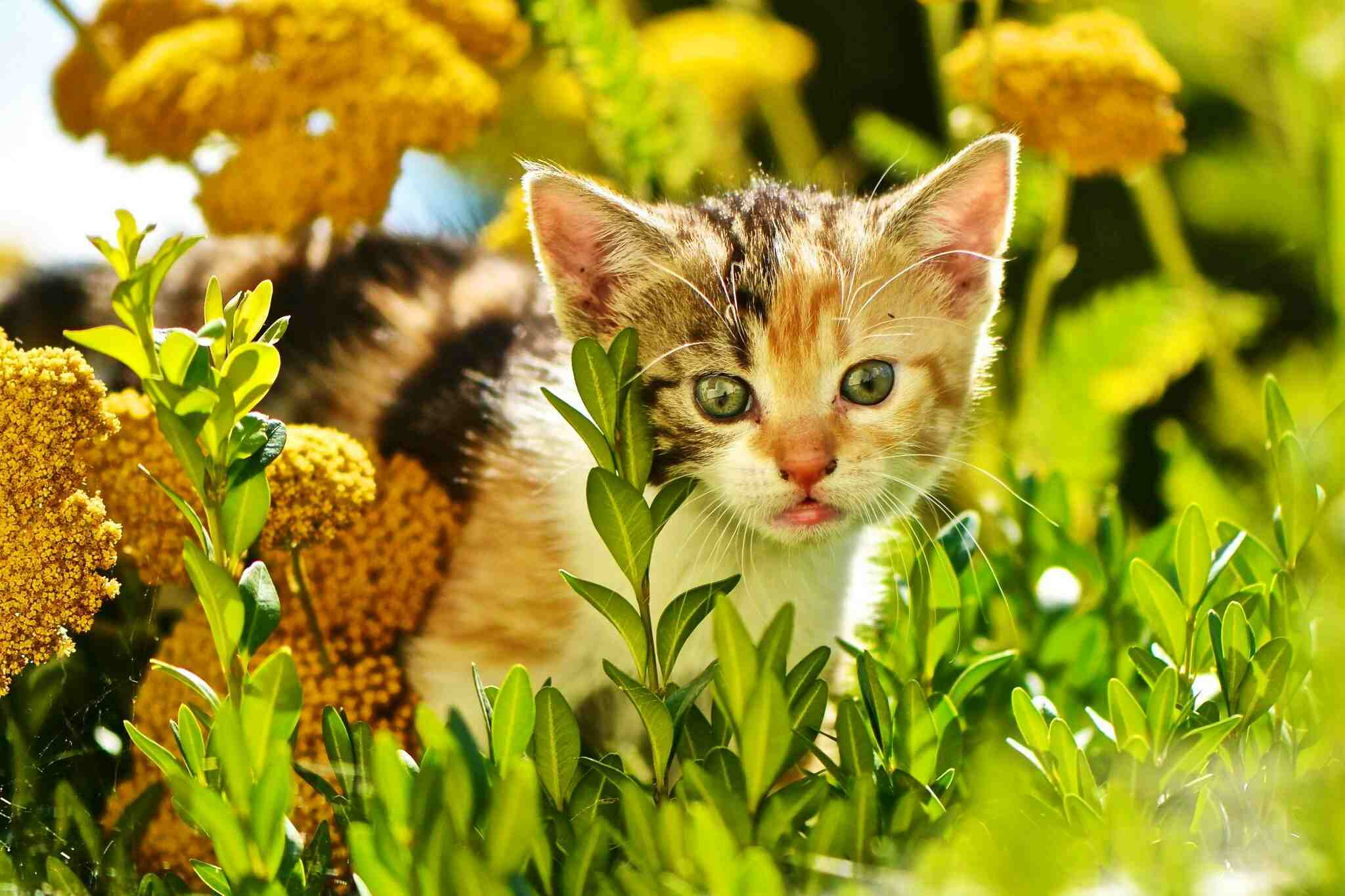 Kitten lurking in the flowers outside.