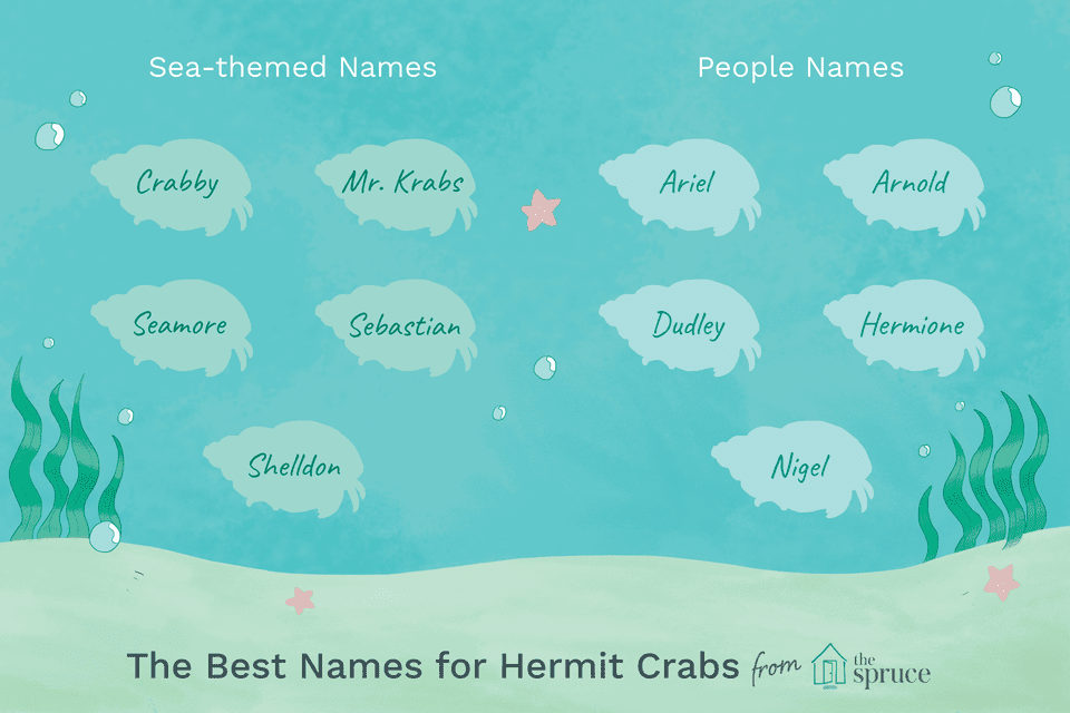Name ideas for hermit crabs