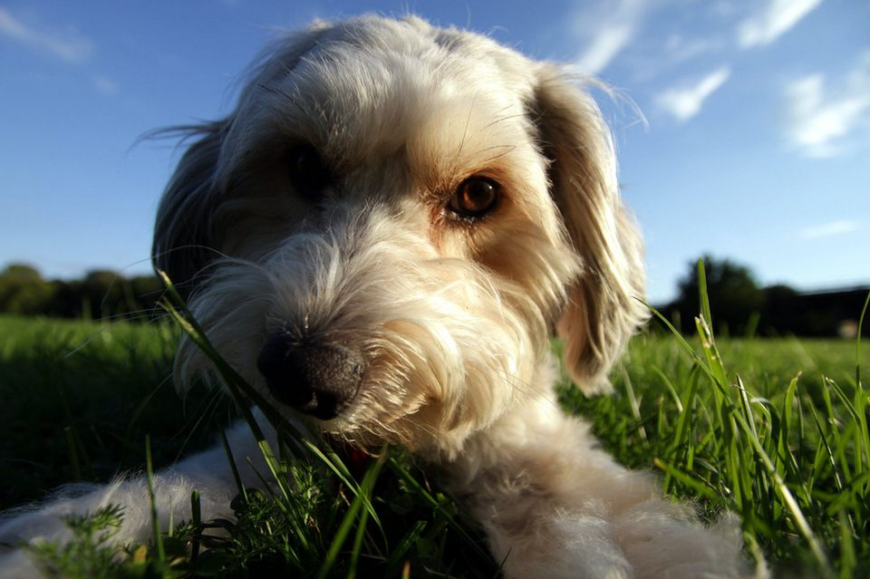 Close up of dog lying in grass