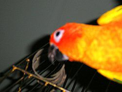 Bird playing with cardboard spirals