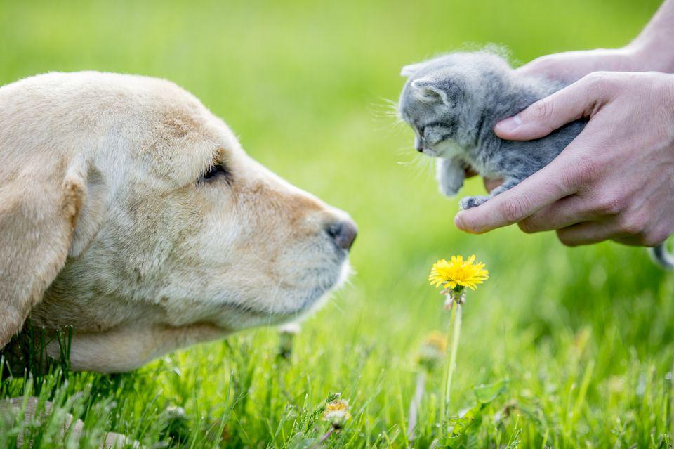 Perro mirando gato en manos