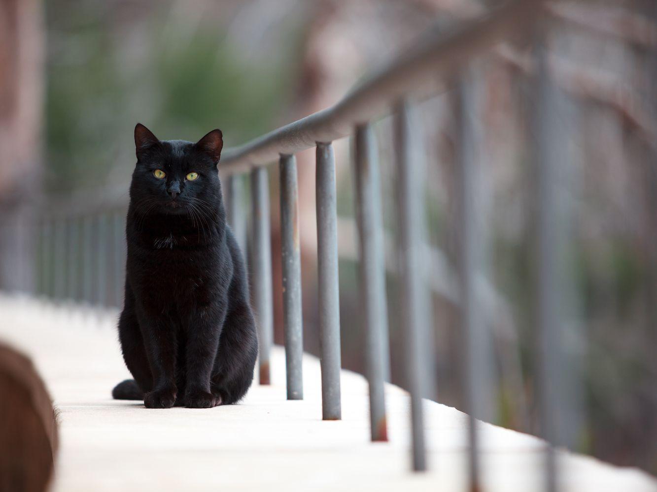 Top Black Cat Names