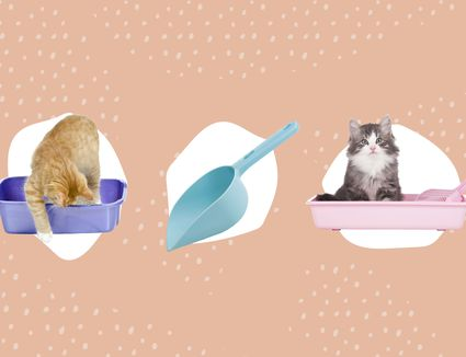 Best Cat Litter Subscriptions