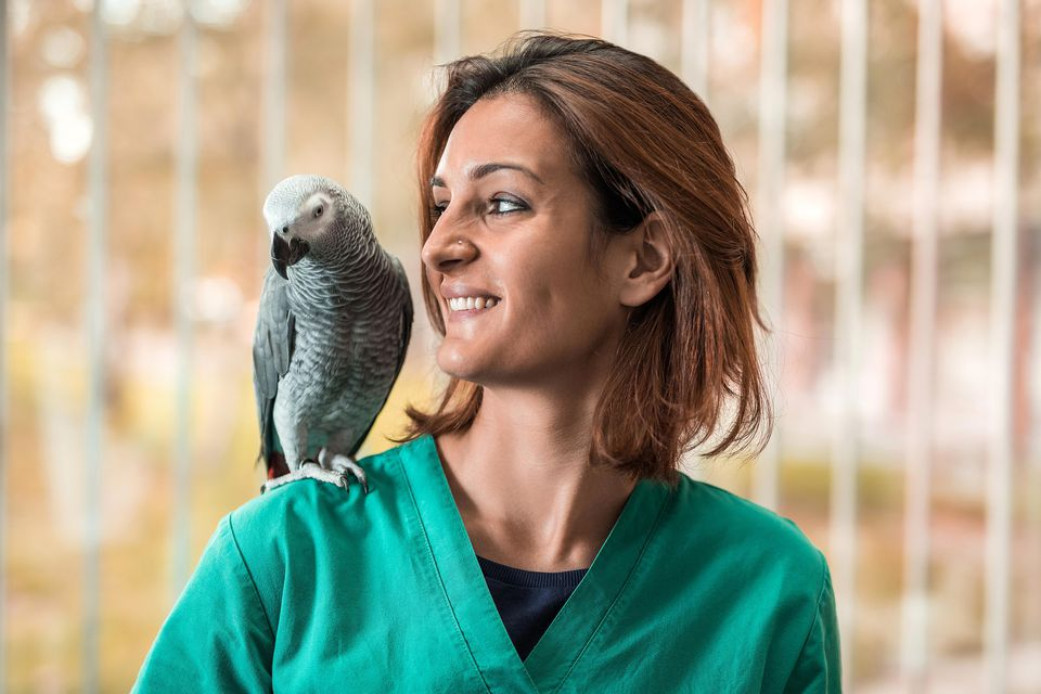 young-happy-veterinarian-with-a-parrot-on-her-shoulder-504929512-58a6e4df3df78c345b6168b6.jpg