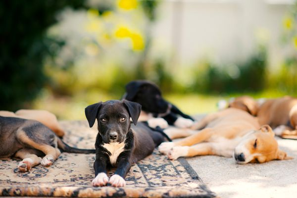 Puppies relaxing outdoors