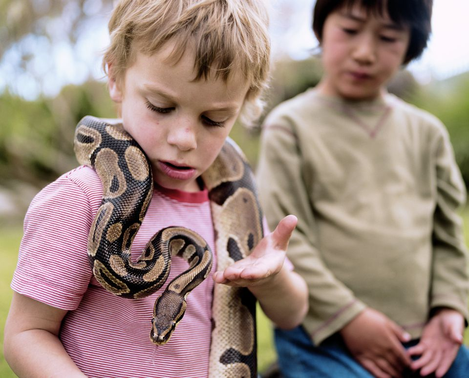 Boy with ball python