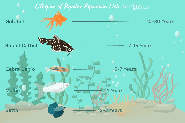 Average Lifespans Of Different Aquarium Fish