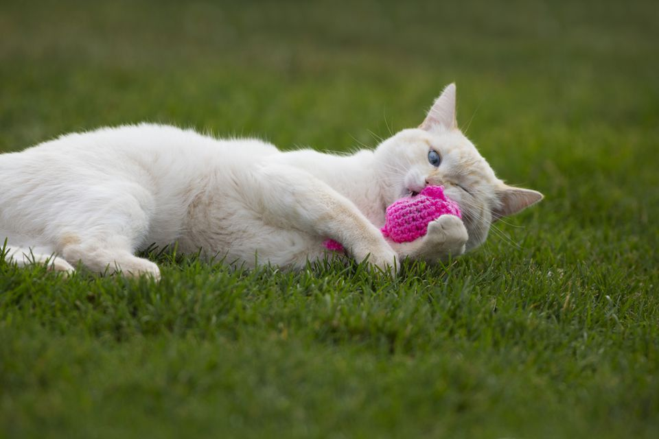 Cat playing with pink catnip toy
