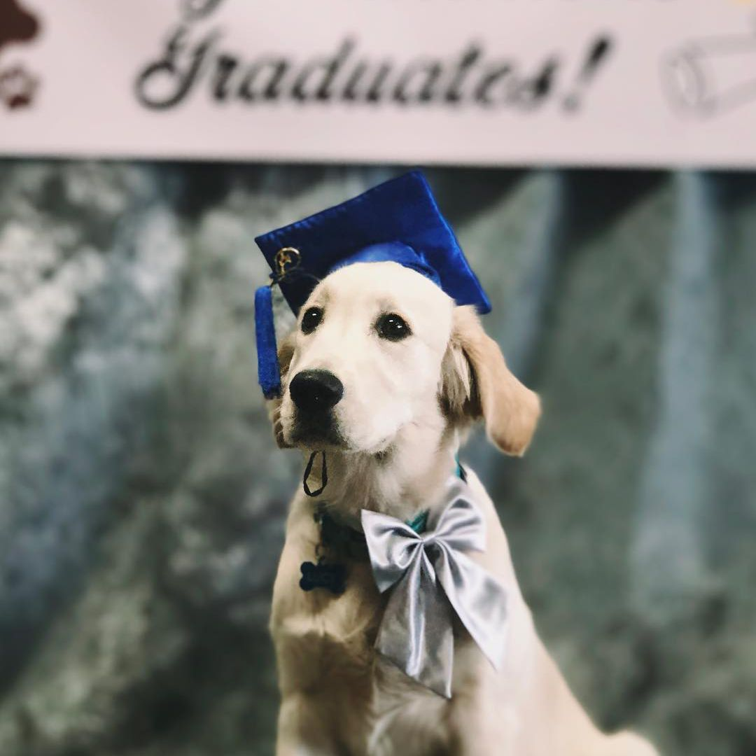 Dog wearing graduation cap