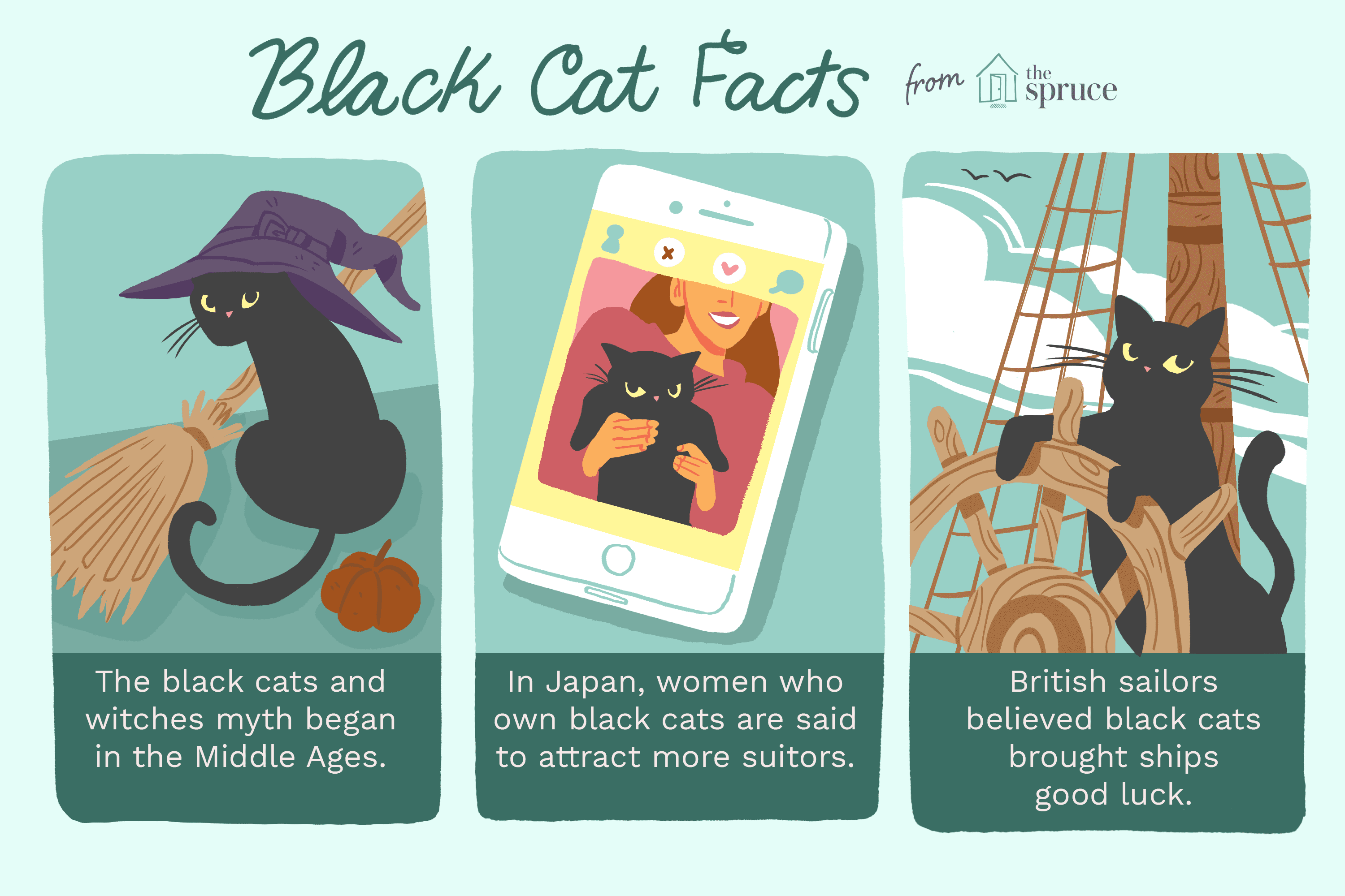 Illustration of black cat facts