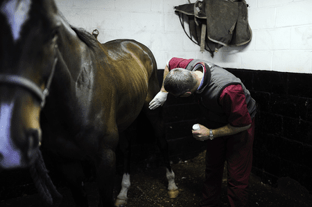 How to Treat Locked Stifle Joints in Horses