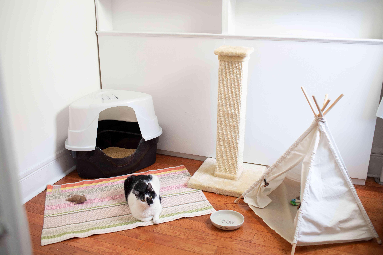 colocar a tu gato en una habitación pequeña después de un movimiento