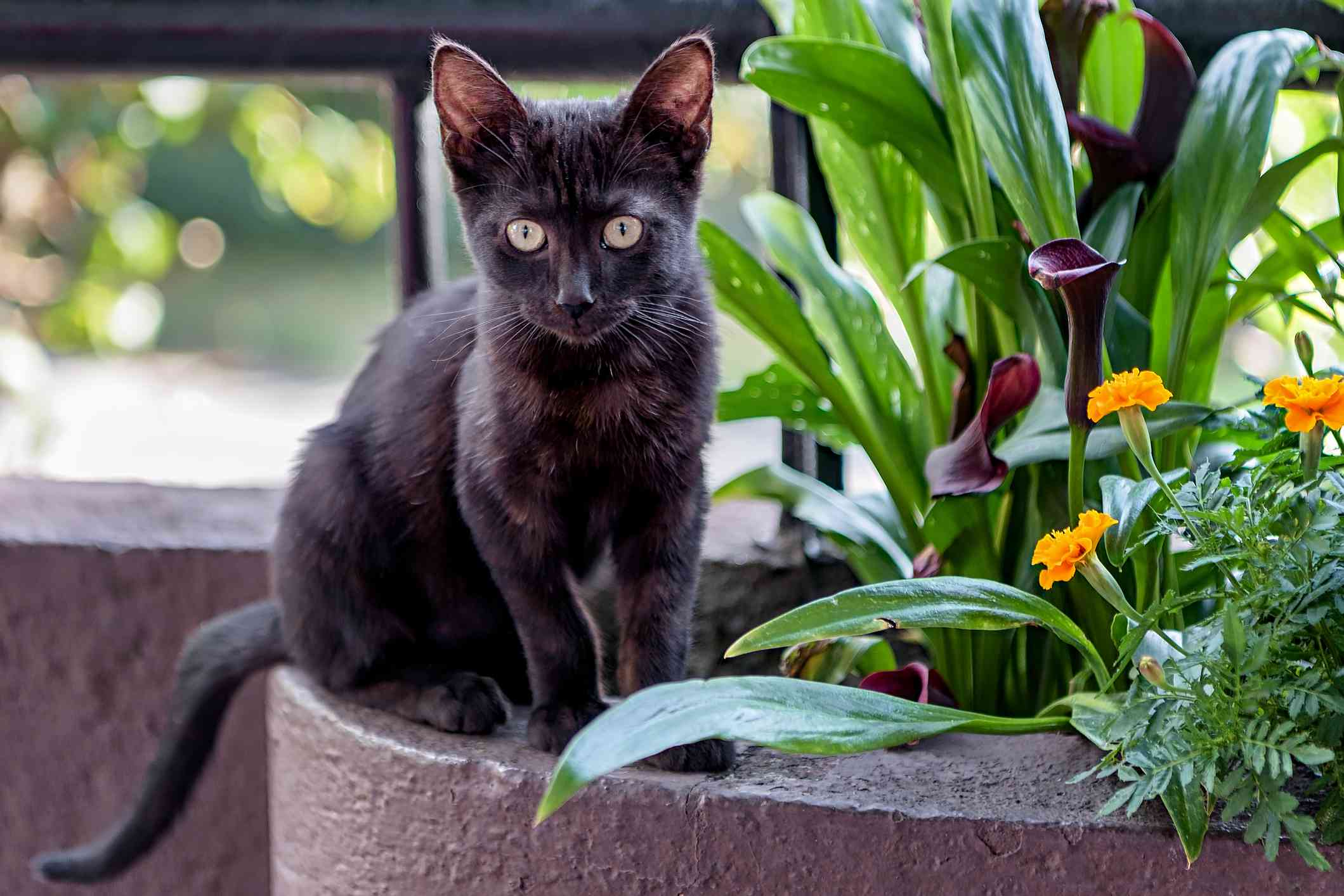 A small black cat with large eyes