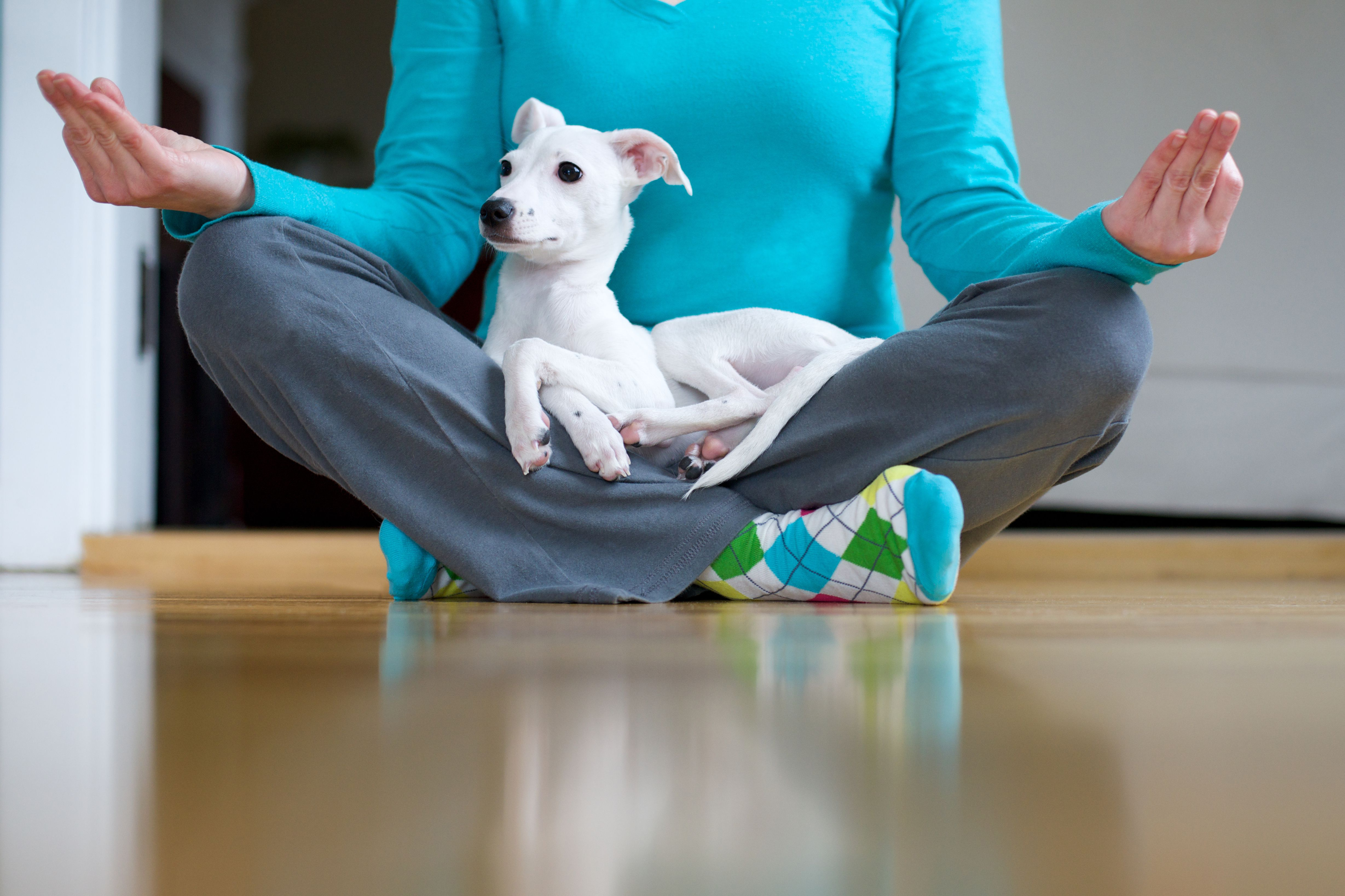 woman doing yoga with dog in lap