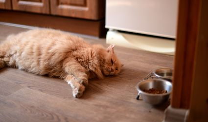 Cat laying on a kitchen floor