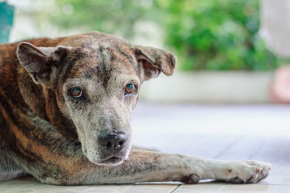 viejo perro tendido en el porche