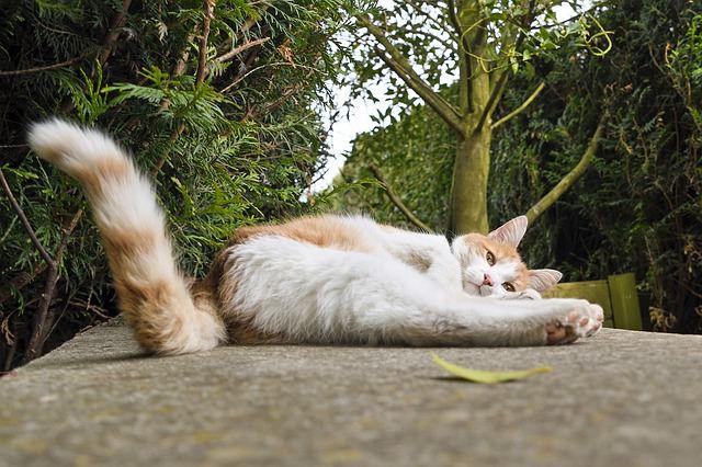 cat outside rolling