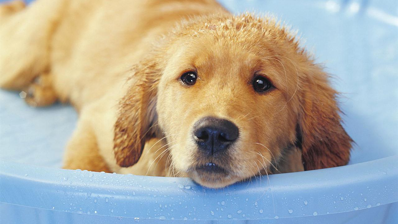 How To Bathe And Groom Your Puppy