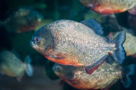 common fish names beginning with r