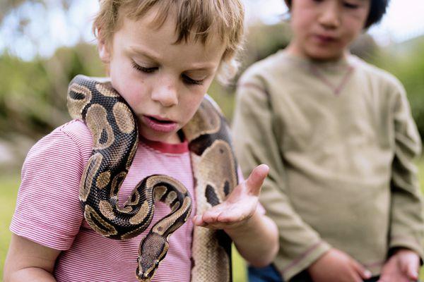 Boy with ball python