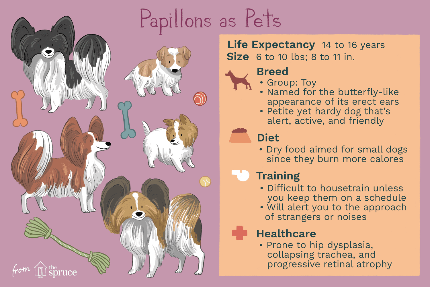 papillons as pets illustration
