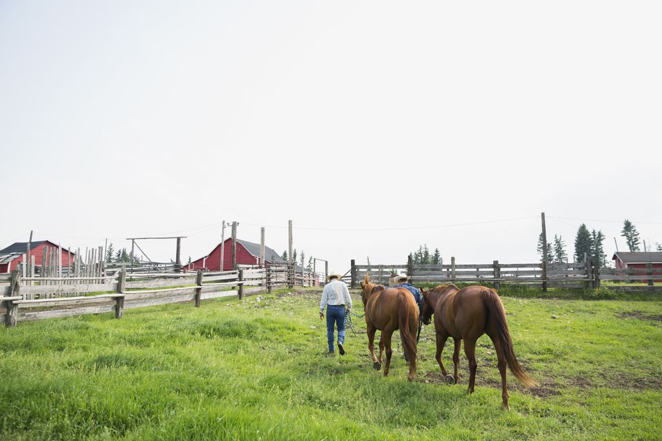 Ranchers leading horses in pasture
