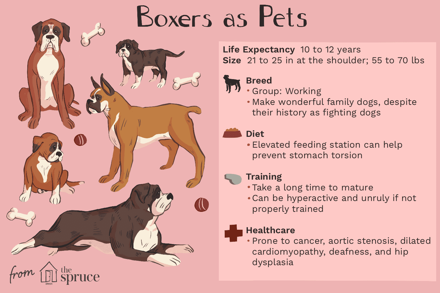 boxers as pets illustration