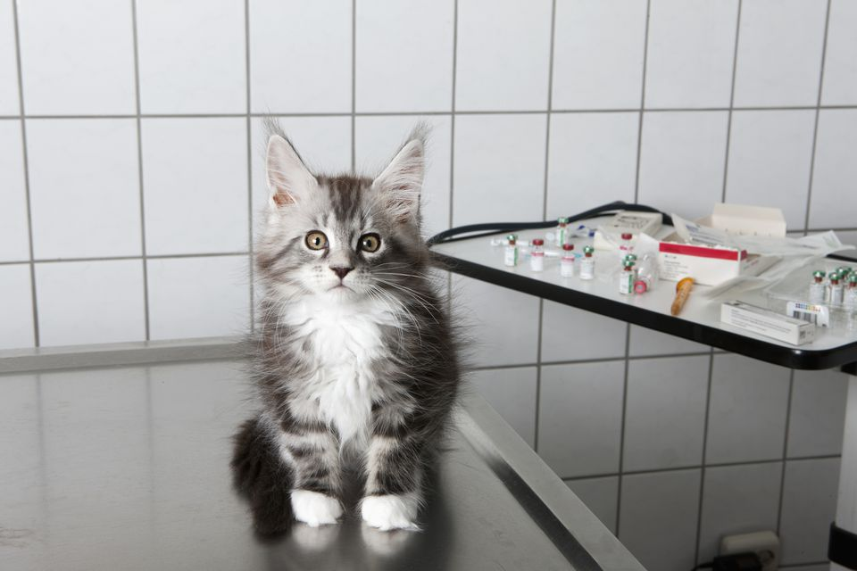 Cat on vet table in front of vaccine supplies