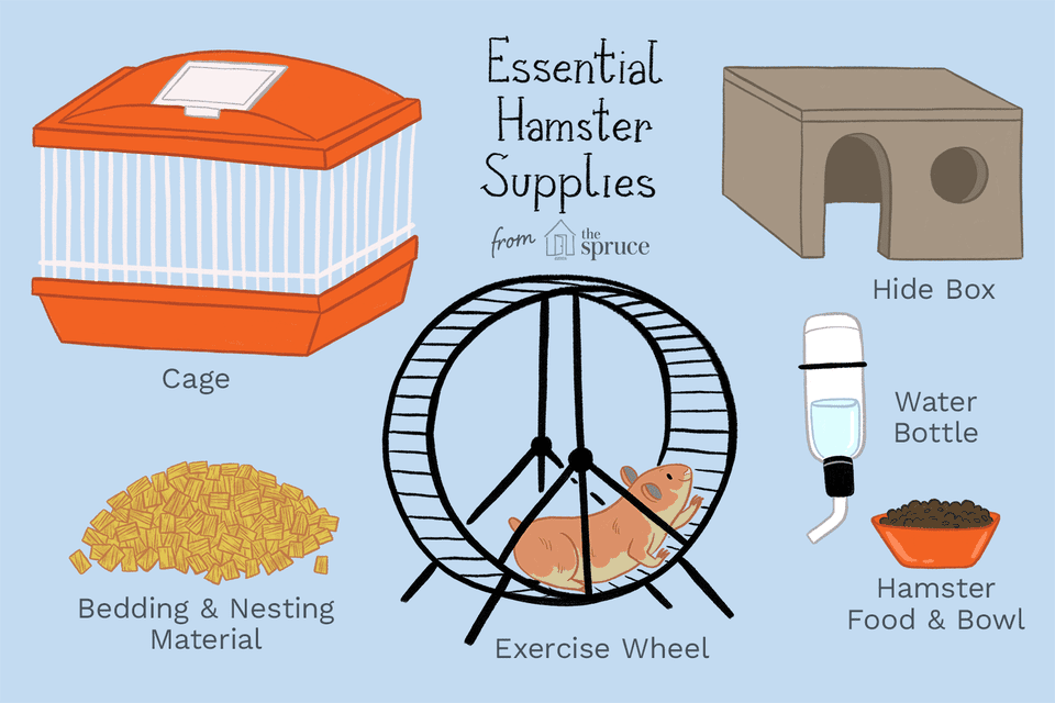illustration of essential hamster supplies