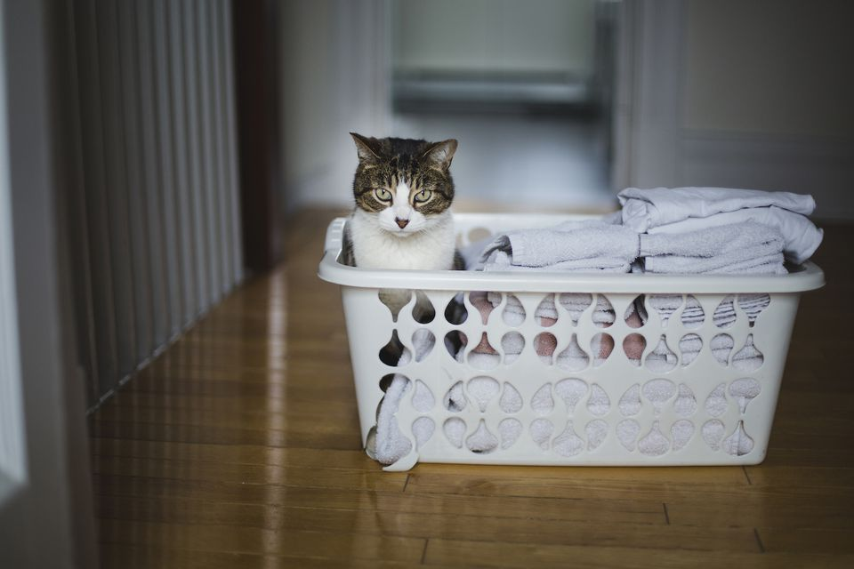 cat sitting in laundry basket with clean laundry