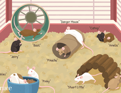 names for your pet mouse