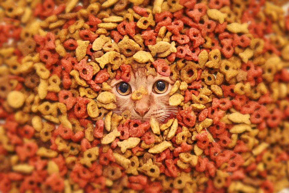 Dry food and a cat