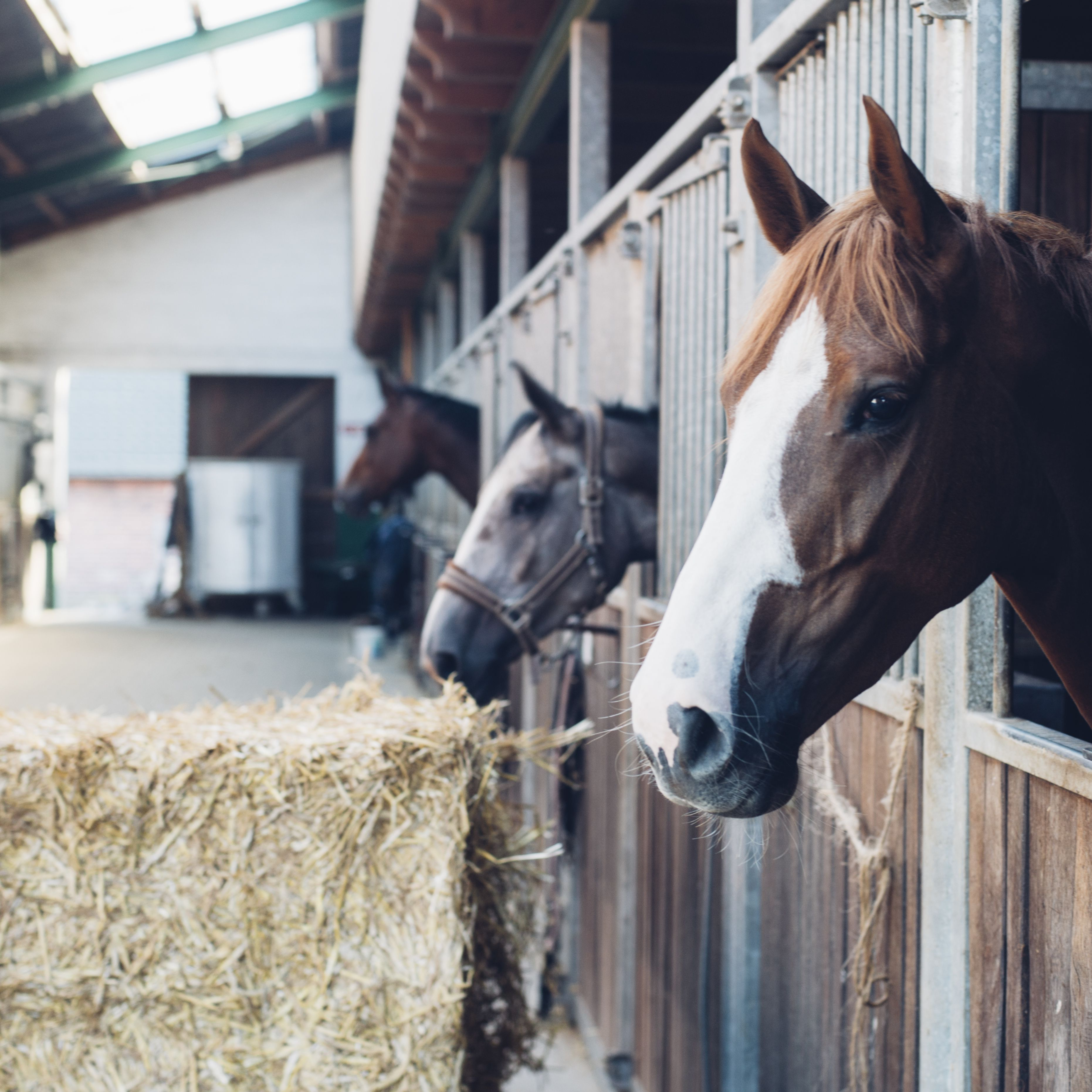 How To Plan And Design A Stable For Your Horse