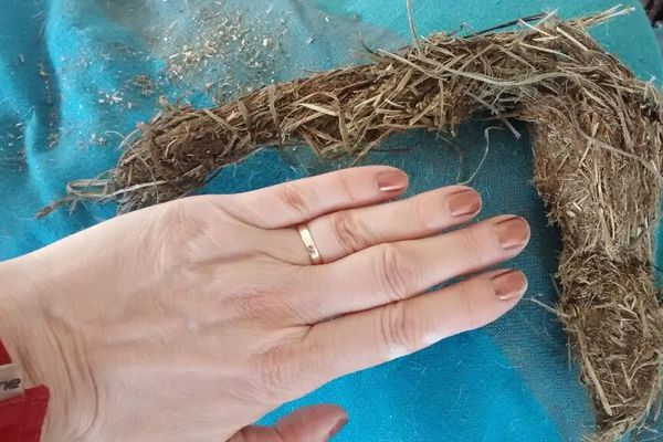Chewed hay from a horse with a hand for scale