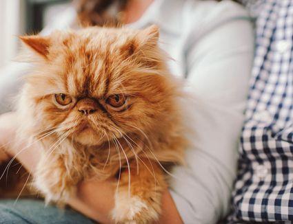 A woman holds an orange cat