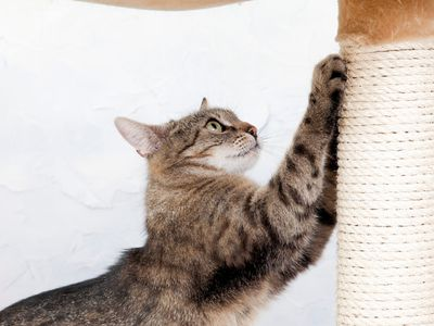 How To Stop Your Cat From Scratching Unwanted Surfaces