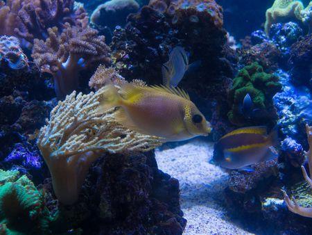 R Aquarium