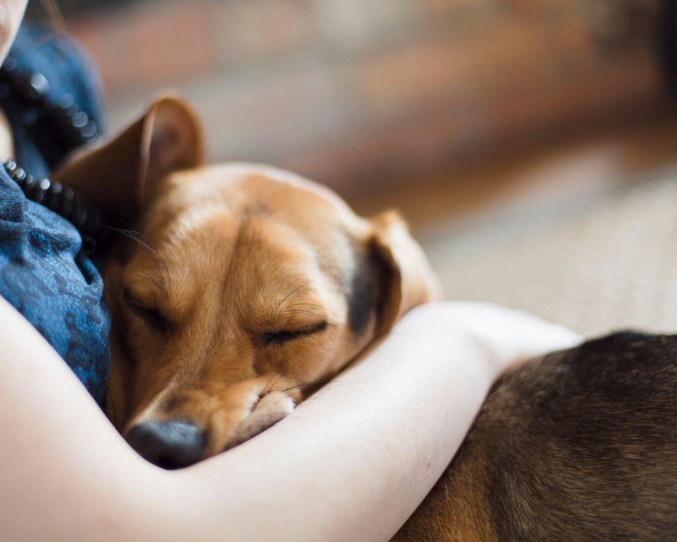 vínculo humano y perro