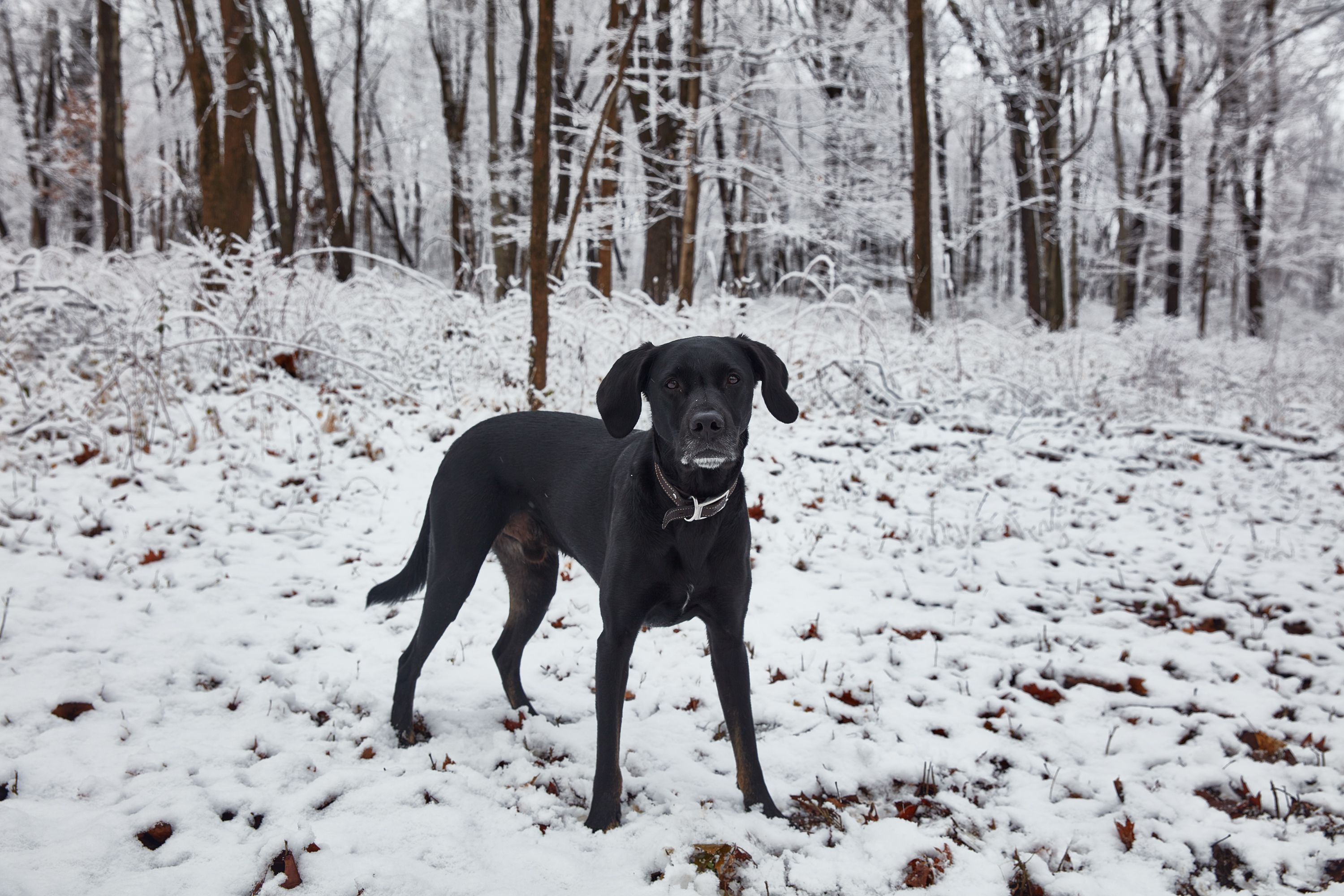 How To Keep Your Dog Safe And Warm In Winter