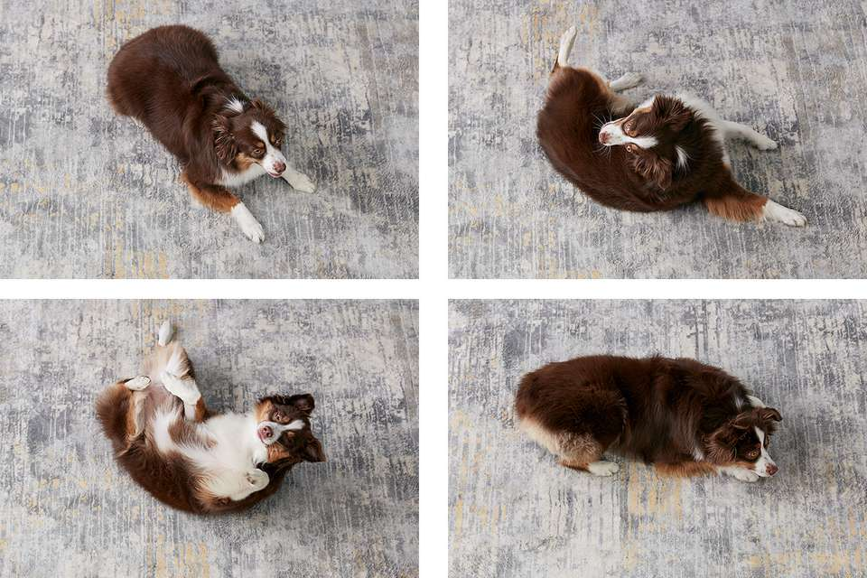 the progression of a dog rolling over