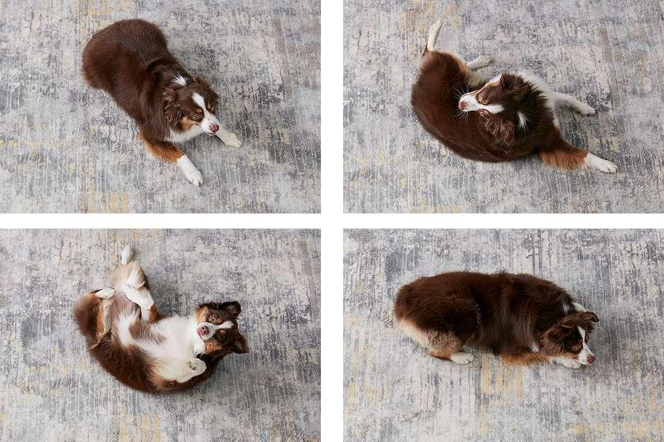 la progresión de un perro rodando