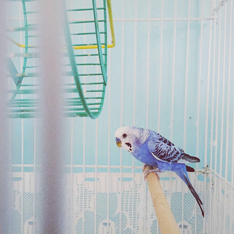 8 Best Types Of Talking Pet Birds