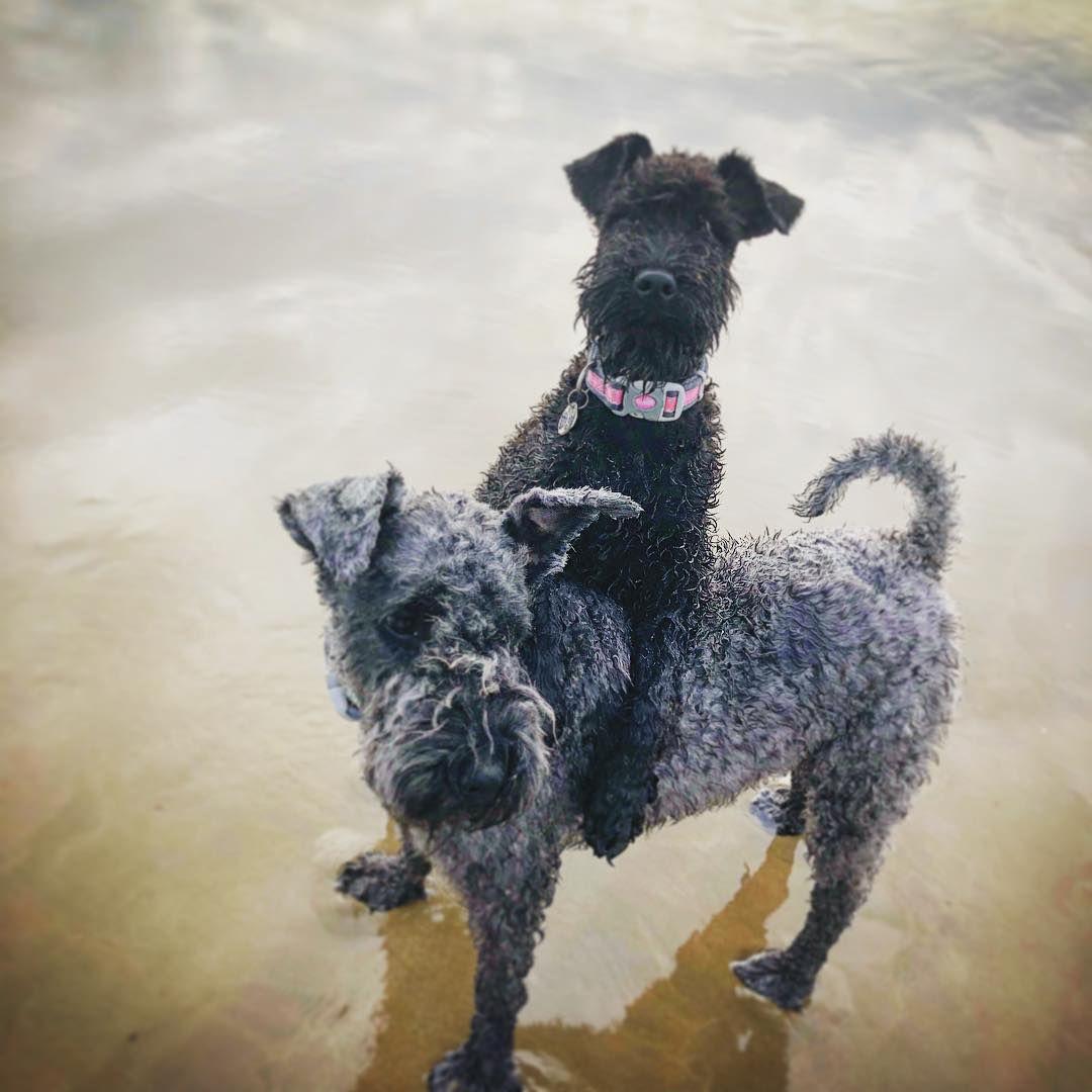 Dos perros jugando en el agua