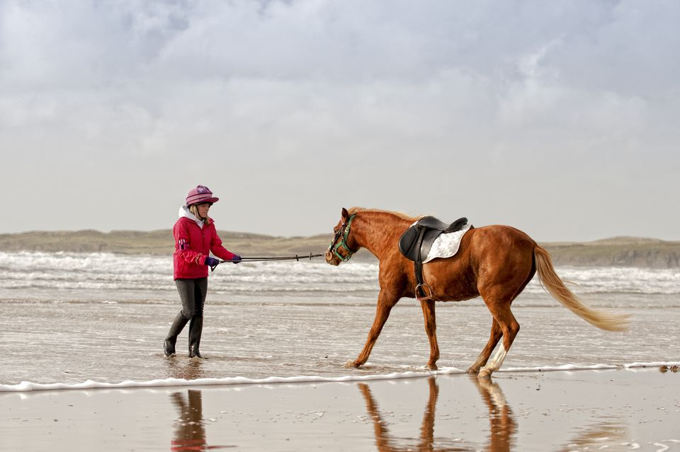 Horse being led to ocean water by its trainer