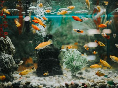 Can I Use Outdoor Gravel or Rocks in an Aquarium?