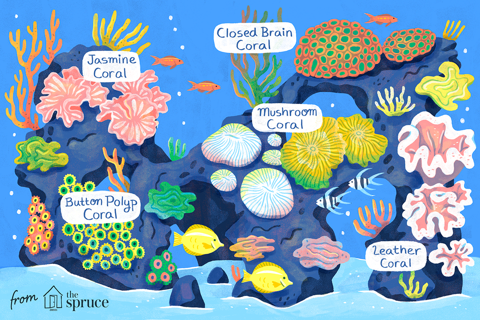 easy saltwater aquarium reef corals illustration