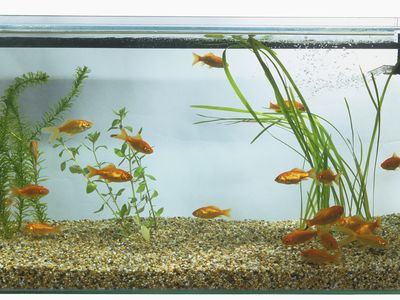 Recommended Air Pumps for Freshwater Aquariums